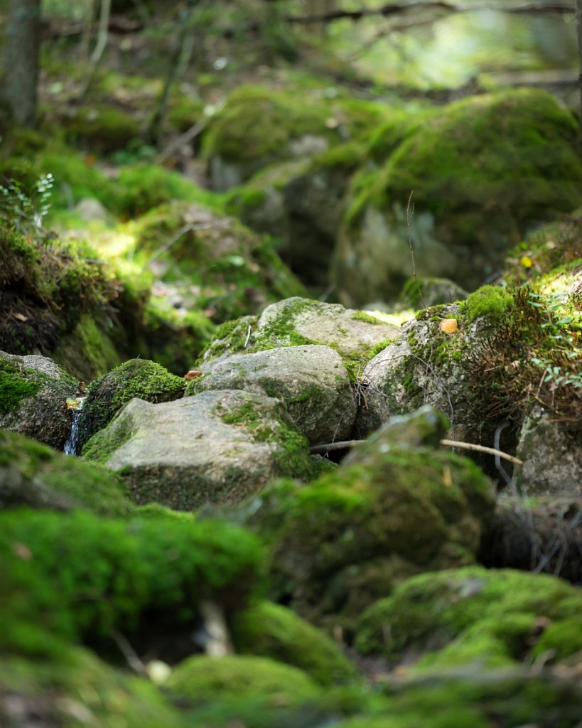 Moss on small river